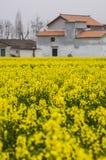 Fiore del canola di Shaanxi Hanzhong Fotografia Stock Libera da Diritti