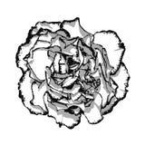 Fiore del chiodo di garofano con il bordo in bianco e nero illustrazione di stock