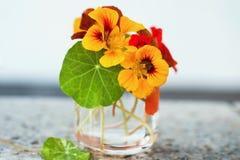 Fiore del crescione acquatico in vetro fotografia stock