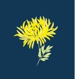 Fiore del crisantemo di autunno dorato-margherita floreale Immagine Stock