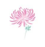 Fiore del crisantemo di autunno Margherita floreale Fotografia Stock