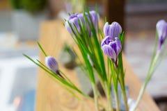 Fiore del croco sulla tavola Immagini Stock