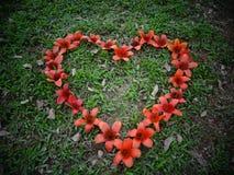 Fiore del cuore in erba verde fotografia stock