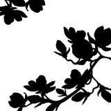 Fiore del fiore della magnolia del ramo della siluetta Illustrazione di vettore illustrazione vettoriale