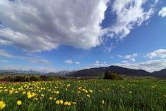 Fiore del dente di leone in primavera davanti alle alpi di Allgaeu in Baviera Fotografie Stock