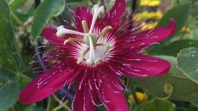 Fiore del deserto fotografia stock