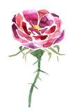 Fiore del disegno dell'acquerello Immagine Stock Libera da Diritti