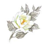 Fiore del disegno della mano Fotografie Stock Libere da Diritti