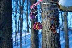 Fiore del ferro del petalo con le serrature Immagini Stock