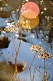 Fiore del fiore Immagine Stock Libera da Diritti