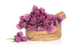 Fiore del fiore del trifoglio Fotografie Stock