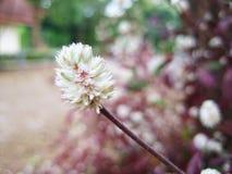 Fiore del fiore nell'inverno Fotografia Stock Libera da Diritti