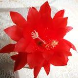 Fiore del fiore Sguardo artistico nei colori vivi d'annata Fotografie Stock