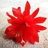 Fiore del fiore Sguardo artistico nei colori vivi d'annata Fotografia Stock