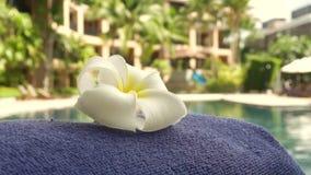 Fiore del frangipane e fondo tropicale di lusso della piscina della località di soggiorno stock footage