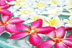 Fiore del frangipane su acqua Fotografia Stock