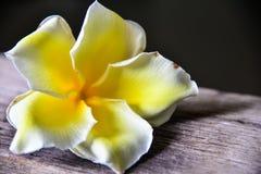 Fiore del frangipane su di legno Fotografie Stock
