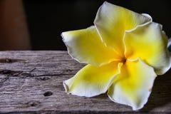 Fiore del frangipane su di legno Fotografia Stock Libera da Diritti