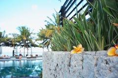 Fiore del frangipane sui precedenti dello stagno Fotografia Stock Libera da Diritti