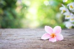Fiore del frangipane sulla tavola di legno Fotografia Stock Libera da Diritti