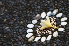 Fiore del Frangipani Fotografie Stock