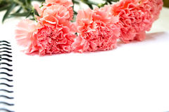 Fiore del garofano su fondo bianco con effetto Fotografie Stock