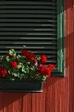 Fiore del geranio immagini stock libere da diritti