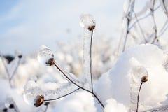 Fiore del ghiaccio Fotografie Stock