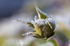 Fiore del ghiaccio immagini stock libere da diritti