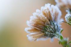 Fiore del ghiaccio fotografia stock
