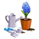 Fiore del giacinto e strumenti di giardino Immagine Stock