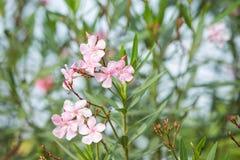 Fiore del giardino immagini stock