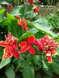 Fiore del giardino Immagine Stock