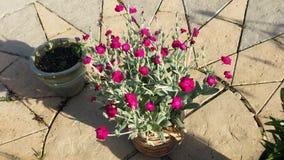 Fiore del giardino Immagine Stock Libera da Diritti