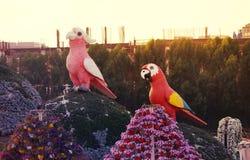 Fiore del giardino di miracolo del Dubai Immagini Stock Libere da Diritti