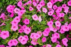Fiore del giardino del museo di Cummer a Jacksonville, Florida Immagini Stock