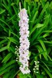 Fiore del giardino del museo di Cummer a Jacksonville, Florida Immagini Stock Libere da Diritti