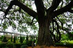 Fiore del giardino del museo di Cummer a Jacksonville, Florida Fotografia Stock