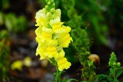 Fiore del giardino del museo di Cummer a Jacksonville, Florida Immagine Stock