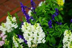Fiore del giardino del museo di Cummer a Jacksonville, Florida Immagine Stock Libera da Diritti