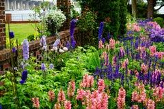Fiore del giardino del museo di Cummer a Jacksonville, Florida Fotografie Stock