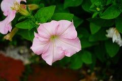 Fiore del giardino del museo di Cummer a Jacksonville, Florida Fotografia Stock Libera da Diritti
