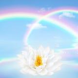 Fiore del giglio del loto e del Rainbow Fotografie Stock Libere da Diritti