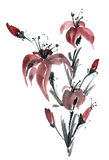 Fiore del giglio dell'acquerello Fotografia Stock