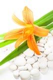 Fiore del giglio e pietre bianche isolati su bianco Immagine Stock Libera da Diritti