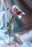 Fiore del giglio in un vetro Immagine Stock Libera da Diritti