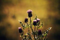 Fiore del giorno Immagini Stock Libere da Diritti