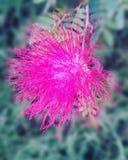Fiore del giorno Immagini Stock