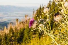 Fiore del lago nei precedenti Fotografie Stock Libere da Diritti