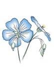 Fiore del lino nello stile dell'acquerello fotografia stock libera da diritti